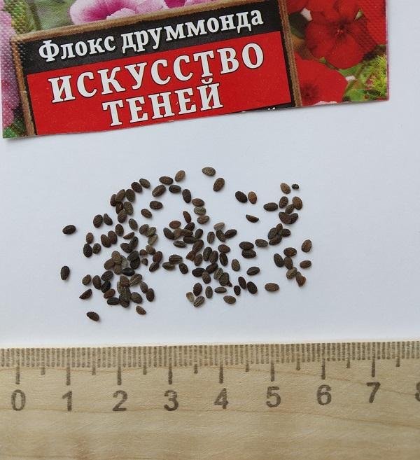 Флоксы семена