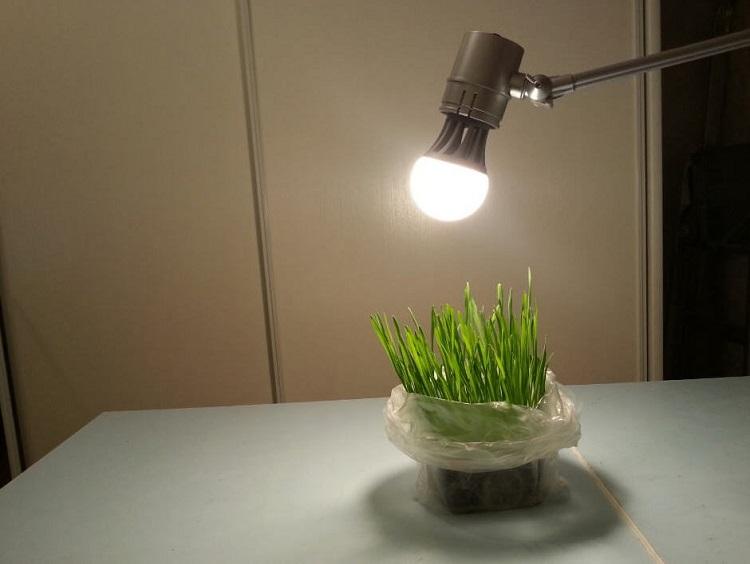 Лампа накаливания для рассады