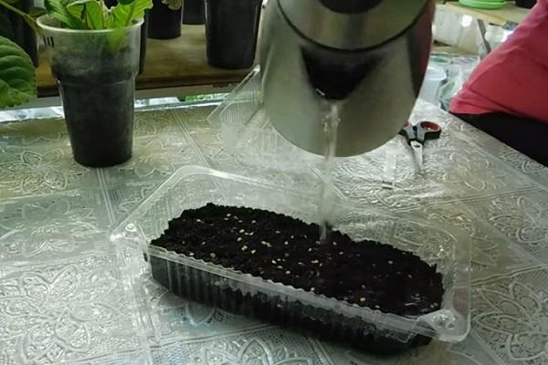 Посев в кипяток