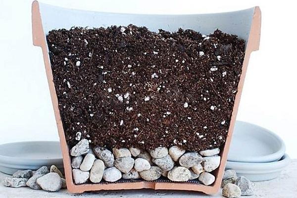Горшок с дренажом и почвой