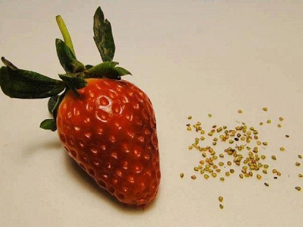 Клубника с семенами