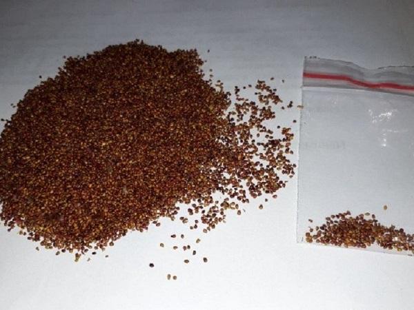 Семена клубники