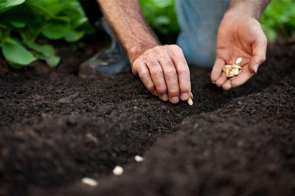 Посева семян