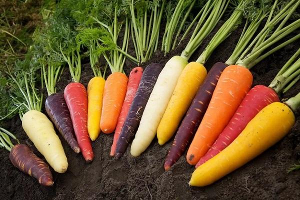 Морковь разных сортов