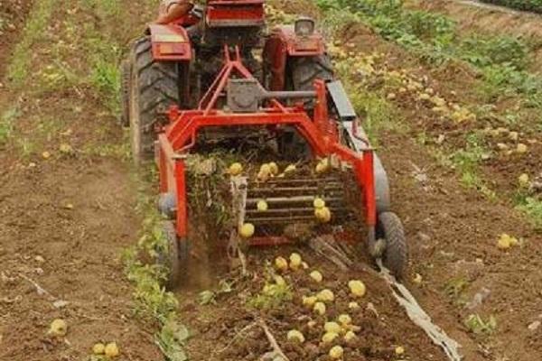 Сбор картофеля минитрактором