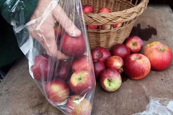 Уборка яблок на хранение