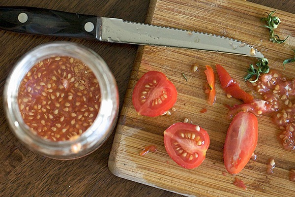 Сбор семян томатов