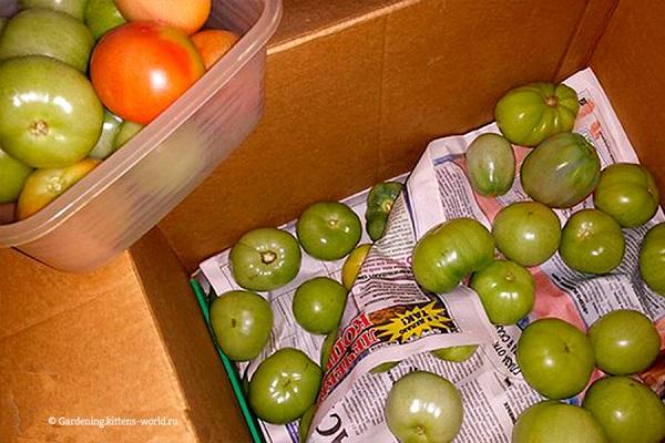 Дозаривание помидор