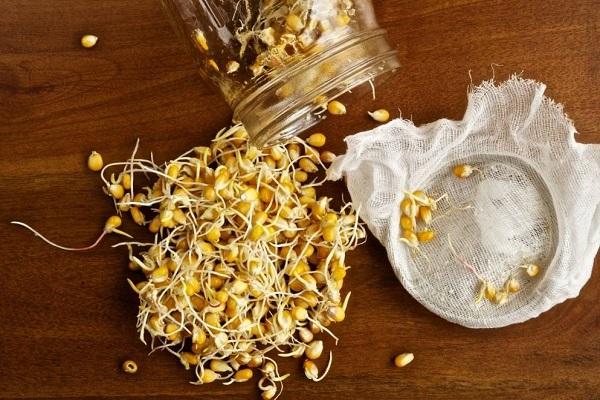 Пророщенные зерна кукурузы
