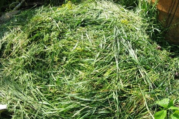 Скошенная трава